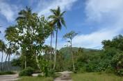 170204-Moreea-Polynesie francaise (14) (Copier)