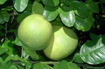 pamplemousse-vert-tahiti-heritage