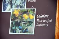 170325-ElCalafate-Argentine (134) (Copier)