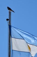 170410-PuertoMadryn-Argentine (101) (Copier)