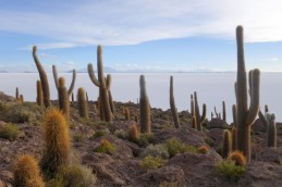 170512-Uyuni-Bolivie (173) (Copier)