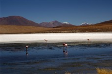 170513-Uyuni-Bolivie (122) (Copier)