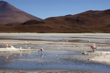 170513-Uyuni-Bolivie (145) (Copier)
