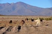170513-Uyuni-Bolivie (17) (Copier)