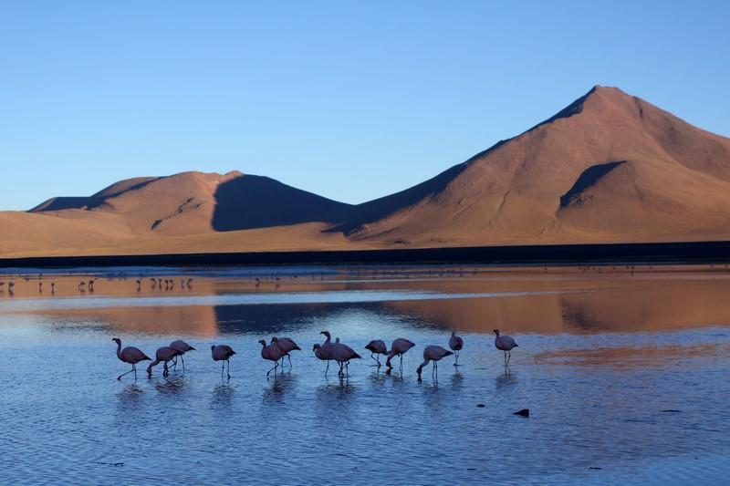 170513-Uyuni-Bolivie (216) (Copier)