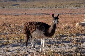 170513-Uyuni-Bolivie (22) (Copier)