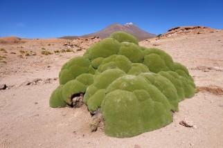 170513-Uyuni-Bolivie (79) (Copier)