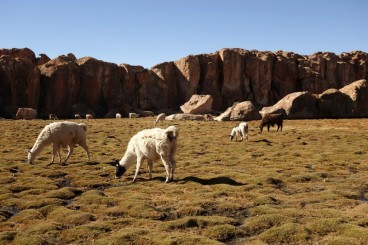 170514-Uyuni-Bolivie (97) (Copier)