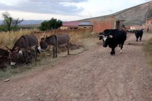 170521-Torotoro-Bolivie (42) (Copier)