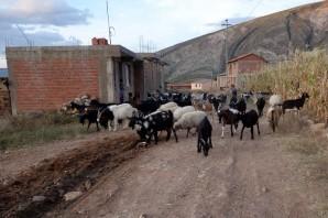170521-Torotoro-Bolivie (43) (Copier)