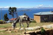 170531-IslaDelSol-Bolivie (21) (Copier)
