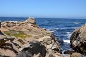 170707-Monterey-USA (13) (Copier)