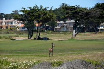 170707-Monterey-USA (25) (Copier)
