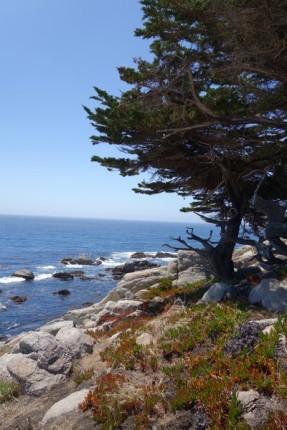 170707-Monterey-USA (50) (Copier)
