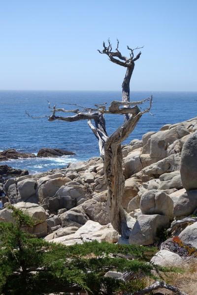 170707-Monterey-USA (51) (Copier)