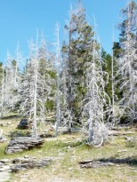 170724-Yellowstone-USA (101) (Copier)