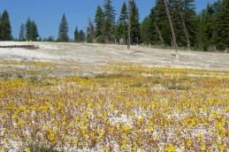 170724-Yellowstone-USA (24) (Copier)