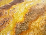 170724-Yellowstone-USA (41) (Copier)