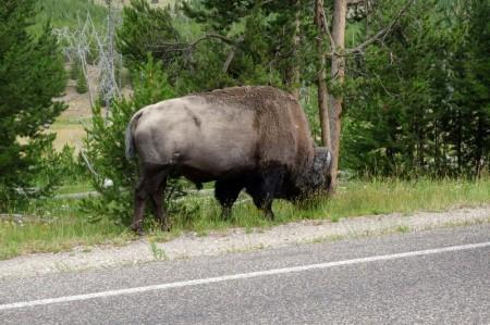 170725-Yellowstone-USA (1) (Copier)