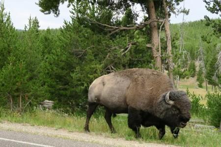 170725-Yellowstone-USA (117) (Copier)