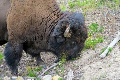 170725-Yellowstone-USA (118) (Copier)