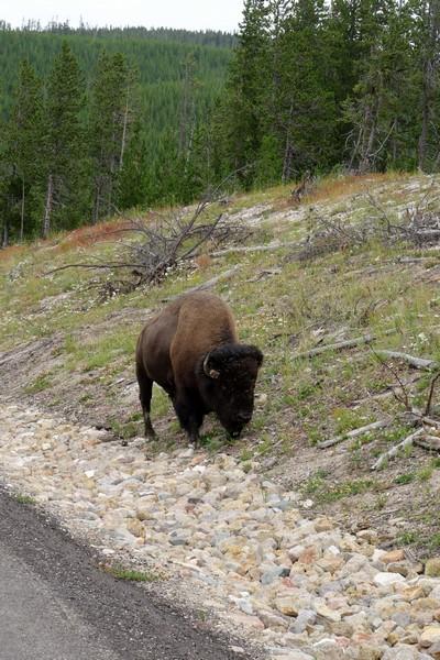 170725-Yellowstone-USA (22) (Copier)