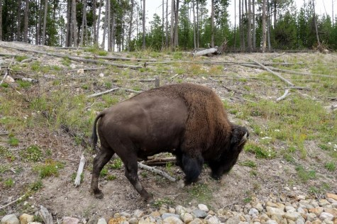 170725-Yellowstone-USA (23) (Copier)