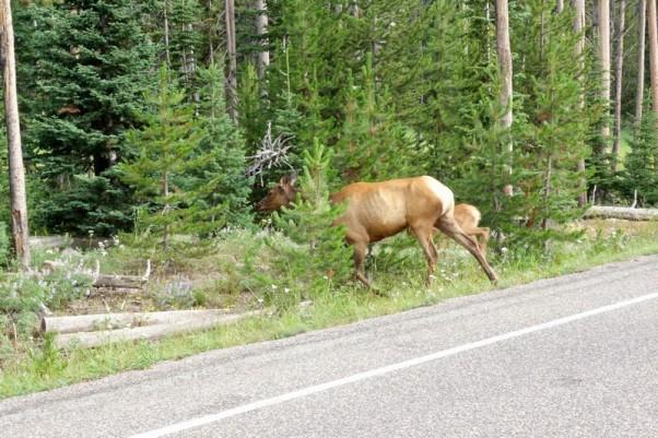 170726-Yellowstone-USA (1) (Copier)