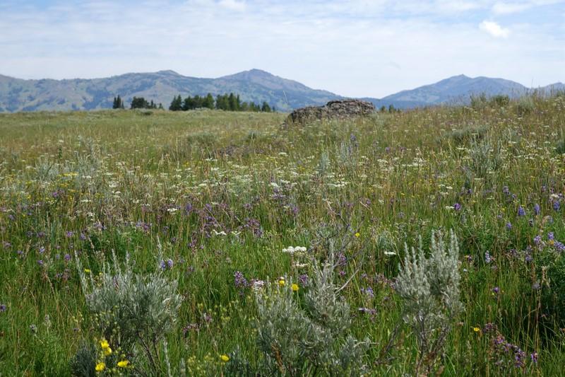 170726-Yellowstone-USA (10) (Copier)
