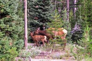 170726-Yellowstone-USA (1b) (Copier)