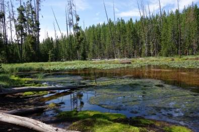 170726-Yellowstone-USA (25) (Copier)