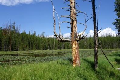 170726-Yellowstone-USA (27) (Copier)